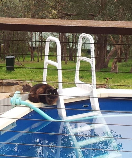 pippi and the pool