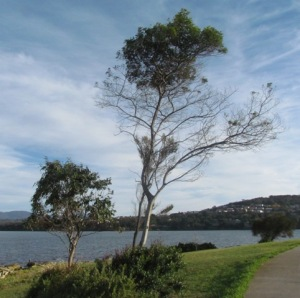 Trees at Bellerive