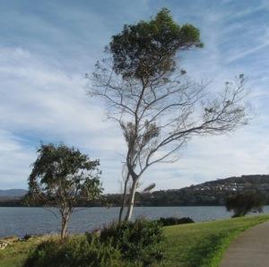 Trees at Bellerive